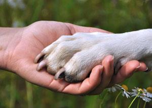 Robin Hood Tierheimservice – Hundepfote